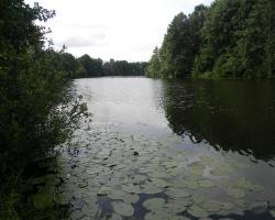 Озерные экосистемы