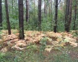 Лесные экосистемы