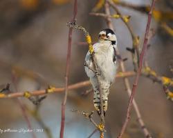 Птицы (Aves)