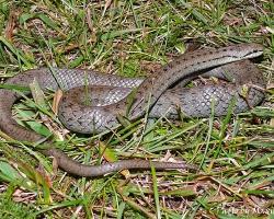 Пресмыкающиеся (Reptilia)