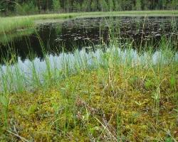 Ельничное озеро