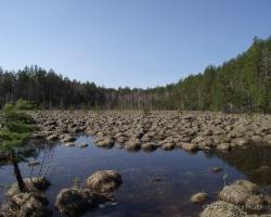 Переходное болото весной