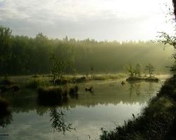 Разработанное верховое болото