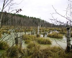 Низиное болото