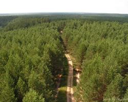 Леса Барахмановского лесничества