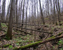 Овраг во Львовском лесничестве