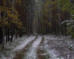 Просека в Кемлянском лесничестве