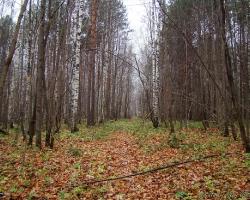 Просека в Львовском лесничестве