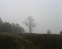 Осень во Львовском лесничестве