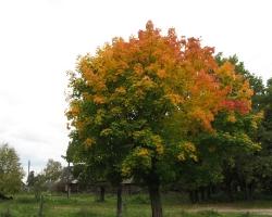 Осень в пос. Смольный