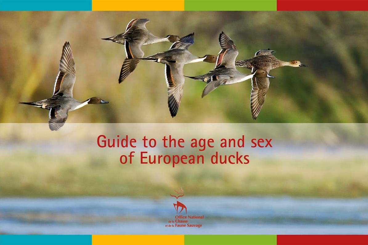 Guide to the age and sex of European ducks